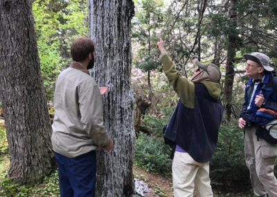 A Peculiar Tree Loosing Sap (Sallie Satterthwaite)