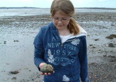 Mowry Beach Snails