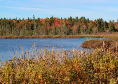 Fall Foliage along the Machias River (Tim Moffett)