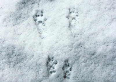 Winter Footprints (Holly Byers)