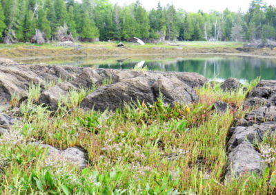 Along the Riversing Falls Trail (Robin Hadlock Seeley)