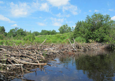 The Beaver Dam on Middle River (Peg Fournier)