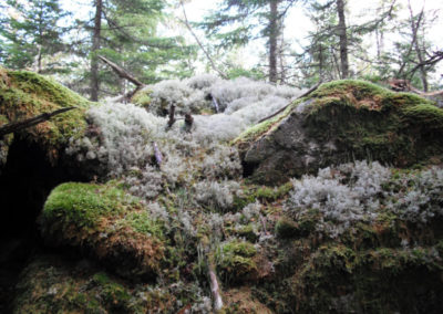 Lichen and Moss Encrusted Rocks